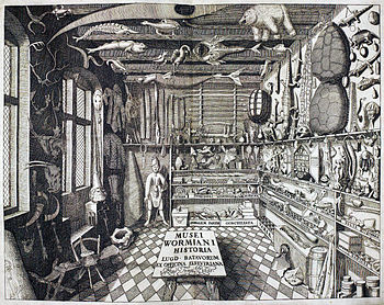 "Musei Wormiani Historia"", the frontispiece from the Museum Wormianum depicting Ole Worm's cabinet of curiosities."